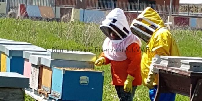Corso recupero api ed imenotteri aculeati